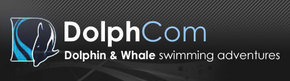 Dolphcom - Dolphin  Whale Swimming Adventures - Yamba Accommodation