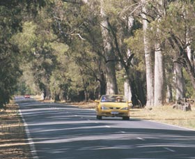 Ludlow Tuart Forest - Yamba Accommodation