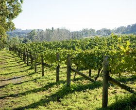 Surveyor's Hill Vineyards - Yamba Accommodation