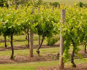 Mt Coghill Vineyard - Yamba Accommodation