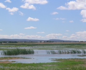 Fivebough Wetlands - Yamba Accommodation