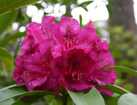 Campbell Rhododendron Gardens - Yamba Accommodation