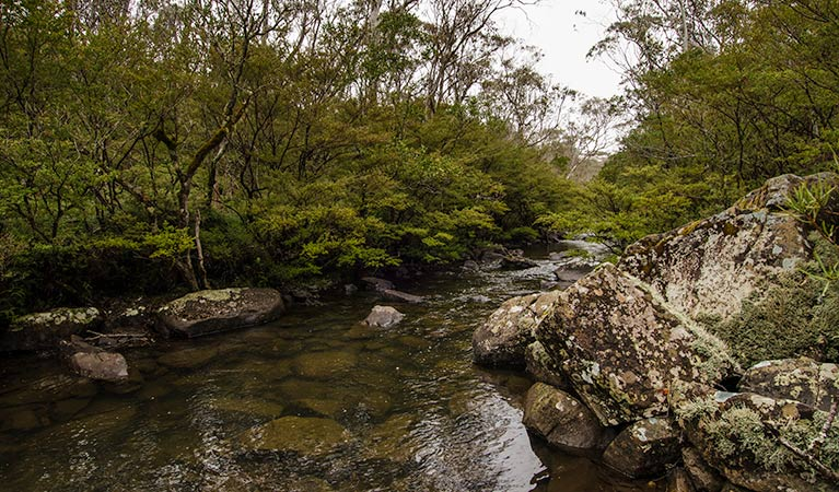 River walking track - Yamba Accommodation