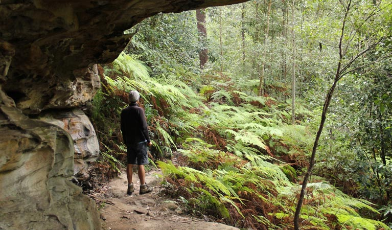 Dharug National Park - Yamba Accommodation