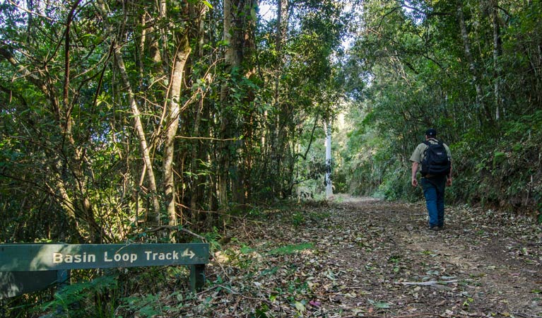 Basin Loop track - Yamba Accommodation