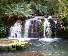Barrington Tops National Park Walks - Yamba Accommodation