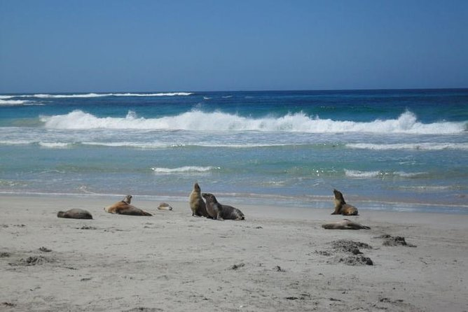 Kangaroo Island in a Day Tour from Adelaide - Yamba Accommodation