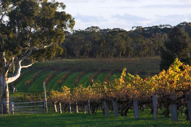 Barossa Valley with Hahndorf Tour from Adelaide - Yamba Accommodation