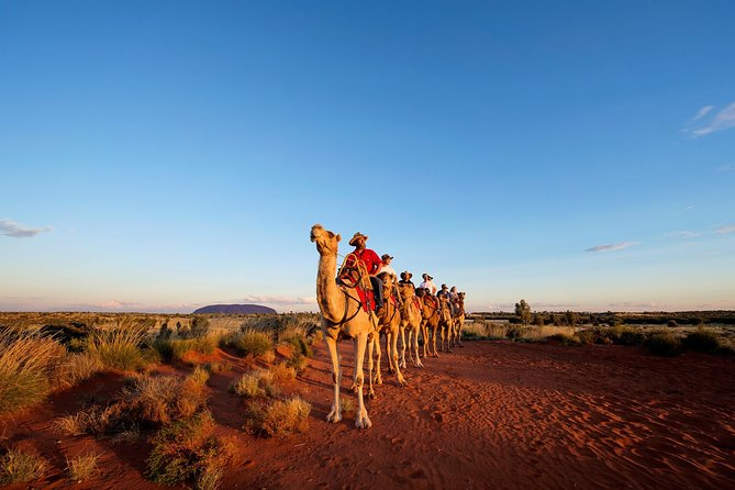 Uluru Camel Express Sunrise or Sunset Tours - Yamba Accommodation