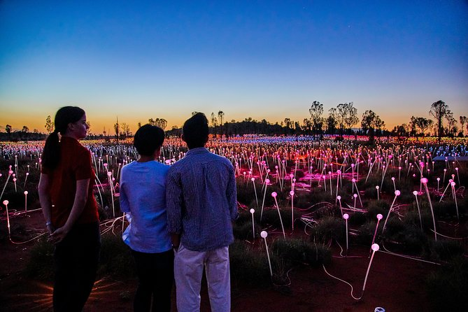 Uluru Field of Light Sunrise Tour - Yamba Accommodation