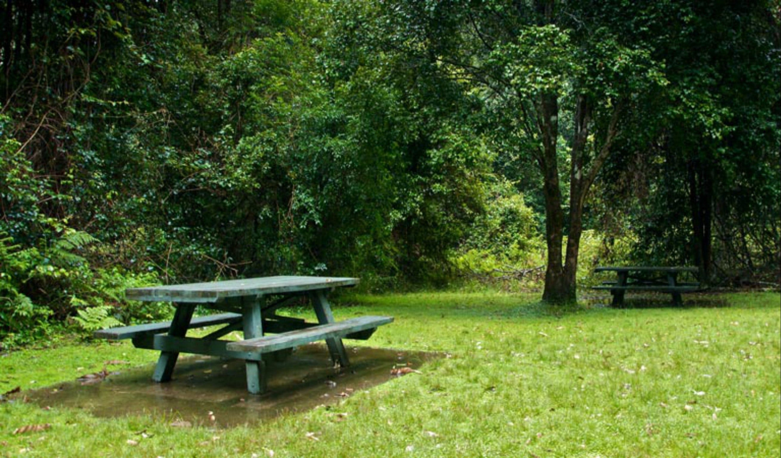 Williams River picnic area - Yamba Accommodation