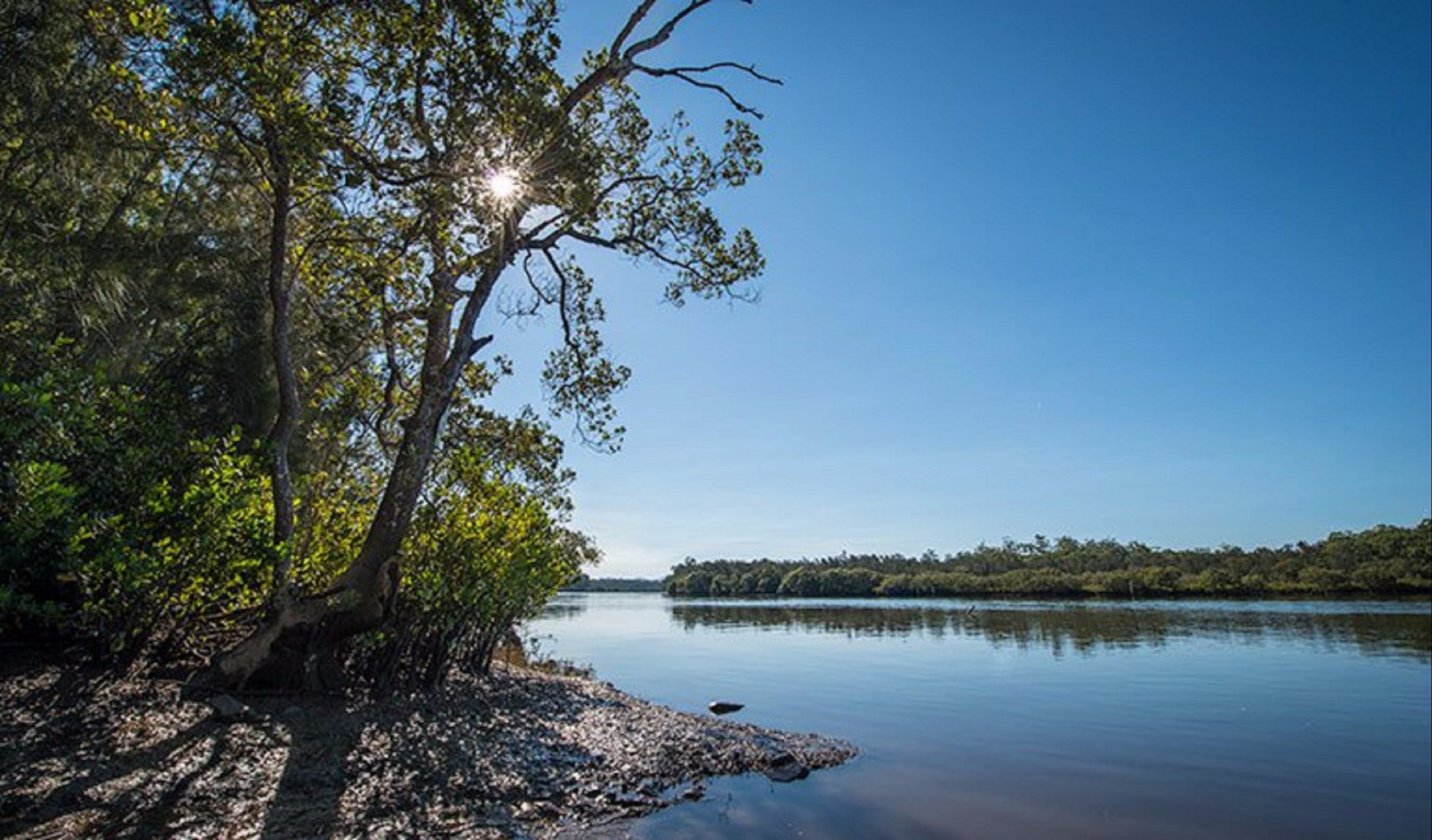 Karuah River National Park and Nature Reserve - Yamba Accommodation